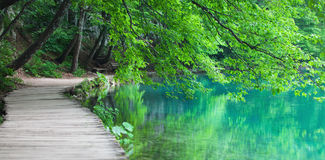 Lake coast in Croatian nature park Plitvice Lakes with tree branches, bench and wooden walkway Stock Photos