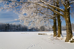 Lake coast in winter Stock Photos