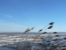 Lake coast in winter Royalty Free Stock Images