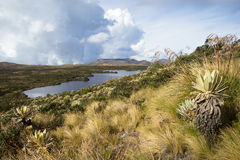 Lake at Colombia. Landscape of mountains at colombia that shows paramo native vegetation. Frailejon plants have been diminished because of global warming effects Stock Image