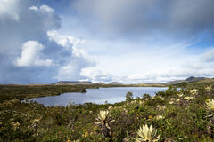 Lake at Colombia. Landscape of mountains at colombia that shows paramo native vegetation. Frailejon plants have been diminished because of global warming effects Stock Images