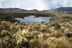 Lake at Colombia. Landscape of mountains at colombia that shows paramo vegetation and Lake. Frailejon plants have been diminished because of global warming Royalty Free Stock Photography
