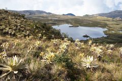 Lake at Colombia. Landscape of mountains at colombia that shows paramo vegetation and lagoon. Frailejon plants have been diminished because of global warming Stock Photography