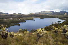Lake at Colombia. Landscape of mountains at colombia that shows paramo vegetation and water source. Frailejon plants have been diminished because of global Royalty Free Stock Photography