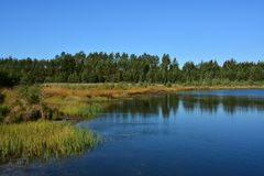 Lake in coniferous forest on the plains royalty free stock photos
