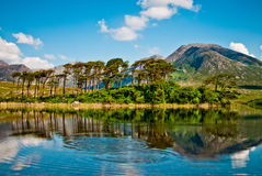 Lake in Connemara,  Ireland. Trees by lake in Connemara, co.Galway, Ireland Royalty Free Stock Photography