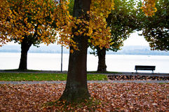 Lake Constance in fall Royalty Free Stock Photos