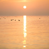 Lake constance sunset Royalty Free Stock Image