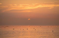Lake constance sunset Stock Image