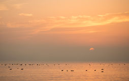 Lake constance sunset Royalty Free Stock Photography