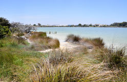Lake Coogee Grassy Wetlands Royalty Free Stock Images