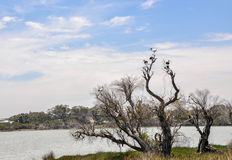 Lake Coogee Landscape with Australian Ibises royalty free stock photo