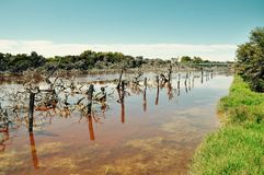 Lake Coogee Wetlands: Post Persective, Western Australia Stock Images
