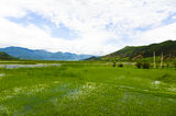 Lake covered by grass Stock Image