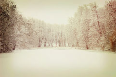 Lake covered with snow and trees growing around it Royalty Free Stock Images