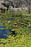 Lake covered with water lilies. Rock in background Stock Images
