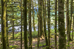 Lake Crescent Forest Path Stock Images