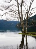Lake Crescent in Olympic National Park in winter Royalty Free Stock Photos