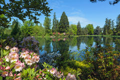 The Lake at Crystal Spring Rhododendron Garden. By the lake at Crystal Springs Rhododendron Garden in Portland Oregon on a beautiful sunny day Royalty Free Stock Images