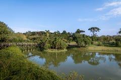 Lake at Curitiba Botanical Garden - Curitiba, Parana, Brazil. Lake at Curitiba Botanical Garden in Curitiba, Parana, Brazil Royalty Free Stock Image