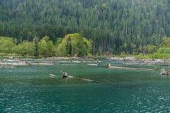Lake Cushman Logs 2 Royalty Free Stock Images