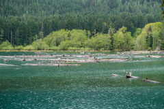 Lake Cushman Logs royalty free stock photo