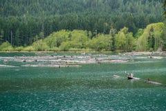 Lake Cushman Logs Royalty Free Stock Photo