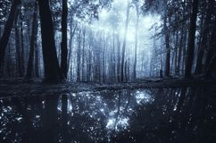 Lake in dark forest at night with moonlight Stock Images