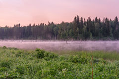 Lake dawn pink fog forest Stock Photography