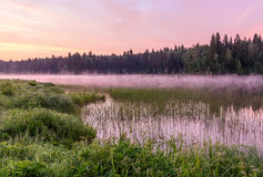 Lake dawn pink fog forest Royalty Free Stock Photo