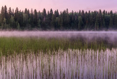 Lake dawn pink fog forest Royalty Free Stock Images