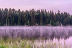Lake dawn pink fog forest Stock Images