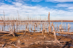 Lake and Dead Trees. A lake and dead, fallen trees. Land that was once covered by water from the lake is now exposed Stock Photos