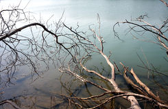 Lake with dead wood. In the mist Royalty Free Stock Photo