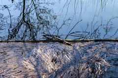 Lake With Decaying Reeds. A lake during springtime with decaying reeds floating on top stock photos