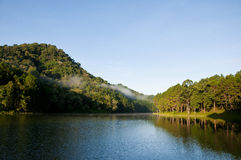 Lake in deep forest Stock Image