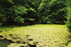 Lake in deep forest Stock Photography