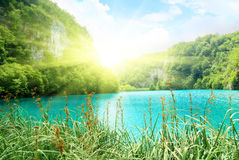 Lake in deep forest Stock Photos