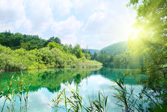 Lake in deep forest Royalty Free Stock Image