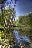 Lake in deep forest Stock Images