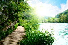 Lake in deep forest and way Royalty Free Stock Photos
