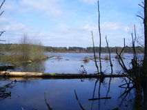 Lake in Delemere Forest Royalty Free Stock Image