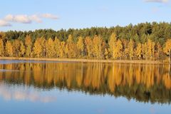 Lake in a delightful autumn forest at sunny day. Autumn trees with reflection. Russia. royalty free stock image
