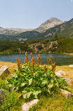 Lake Detail on Mountain Pirin Royalty Free Stock Images