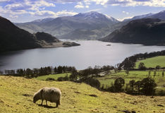 Lake district. National park cumbria england uk - a view looking down on ullswater Royalty Free Stock Images