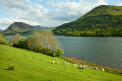 Lake District. Stock Image