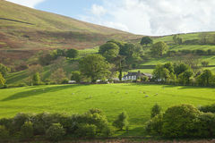 Lake District. Cumbria, UK.  English countryside. Sheep Pastures in the English .  spring Stock Image