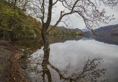 Lake District, Cumbria, England - dark, gloomy autumnal day, the bank. This image shows a view of a lake in Cumbria, Lake District, England, the UK. It was stock photos
