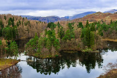 Lake District Cumbria Tarn Hows Royalty Free Stock Photography