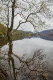 Lake District, England - bleak, gloomy autumnal day, a tree and its reflection. This image shows a view of a lake in Cumbria, Lake District. It was taken on a stock image